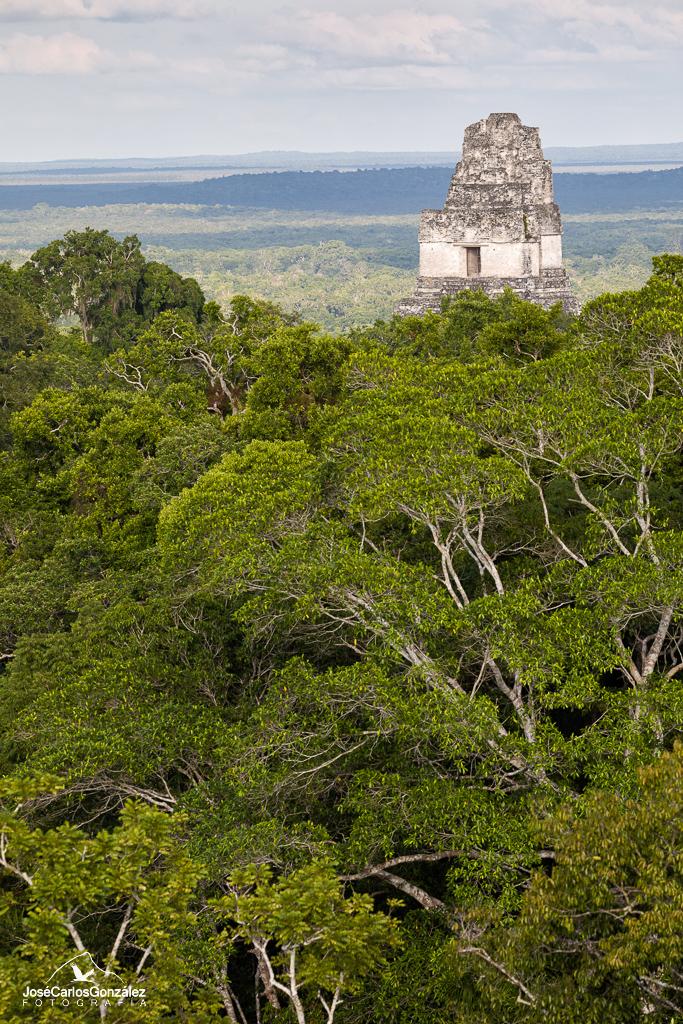 Pirámides de Tikal