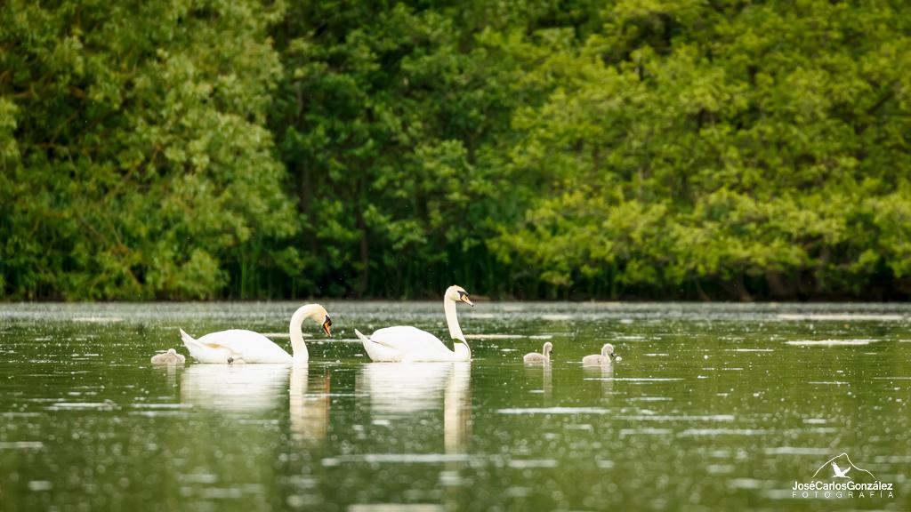 Coxwold - Cisnes
