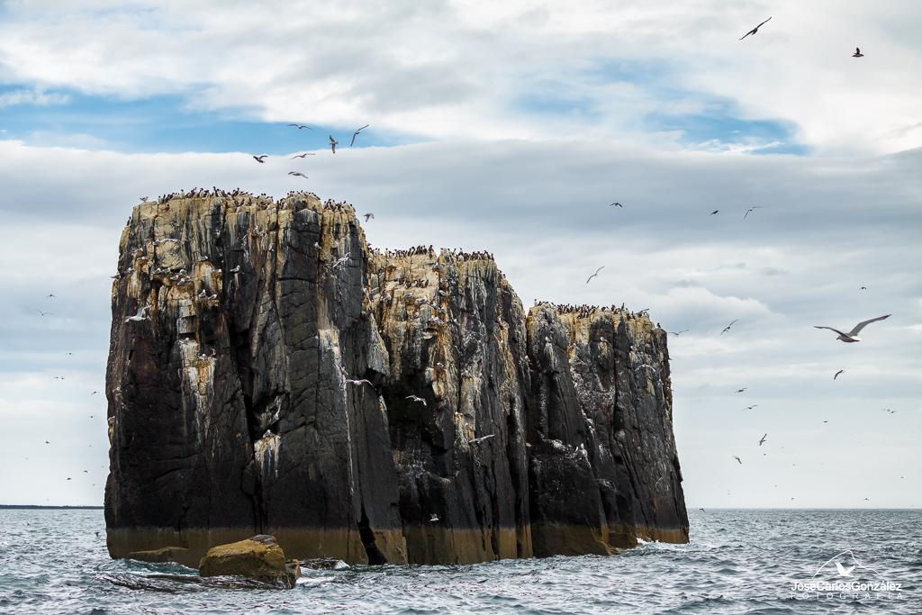 Islas Farne - Pináculos