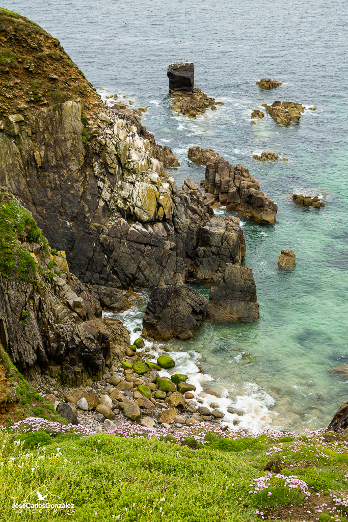Islas Saltee - Acantilados en la isla Great Saltee