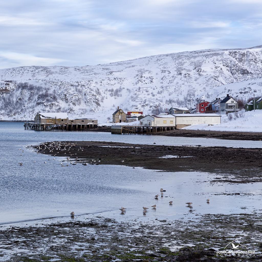 Varanger - Båtsfjord