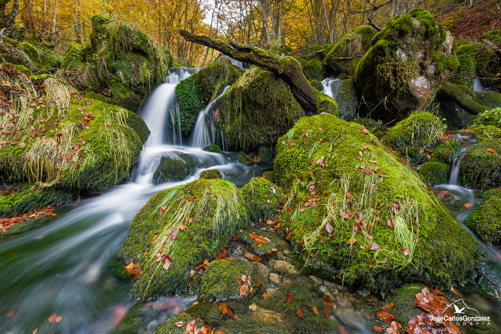 Autumn in the beech forest