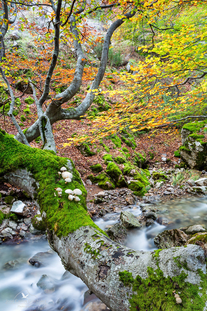 Beech Forest and Mushrooms