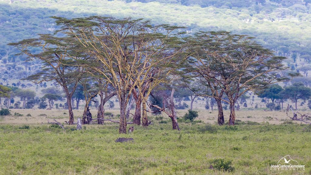 Serengeti - Rinoceronte
