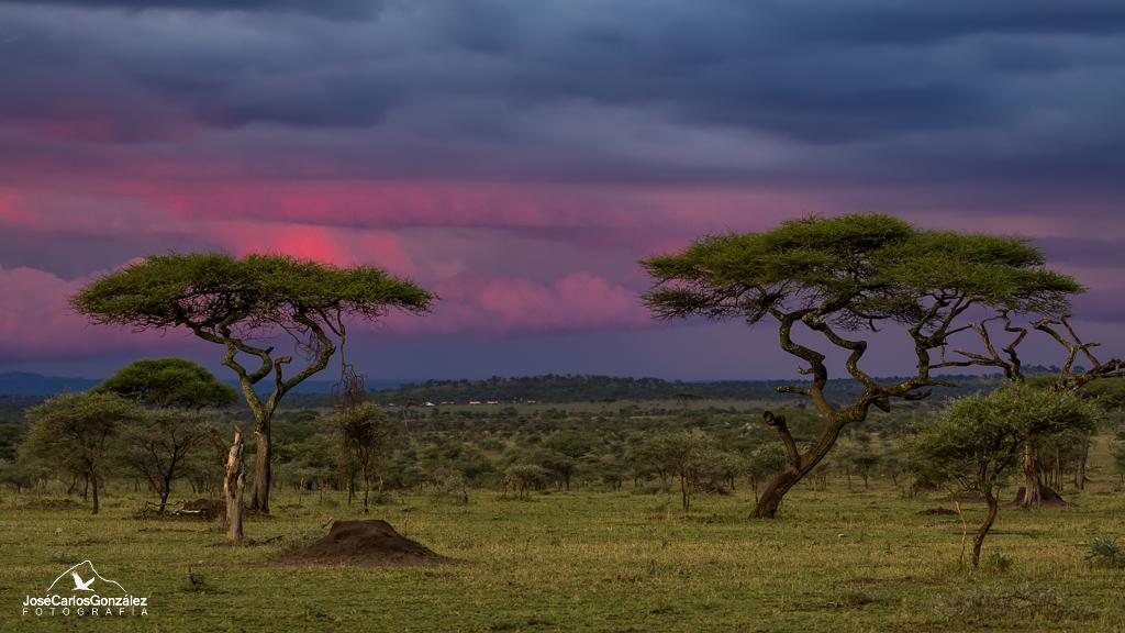 Serengueti - Serengeti Tanzania Bush Camp
