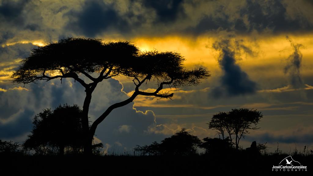 Serengueti - El descanso del cazador